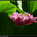 nEO_IMG_160703--Botanical Garden 024-1000.jpg