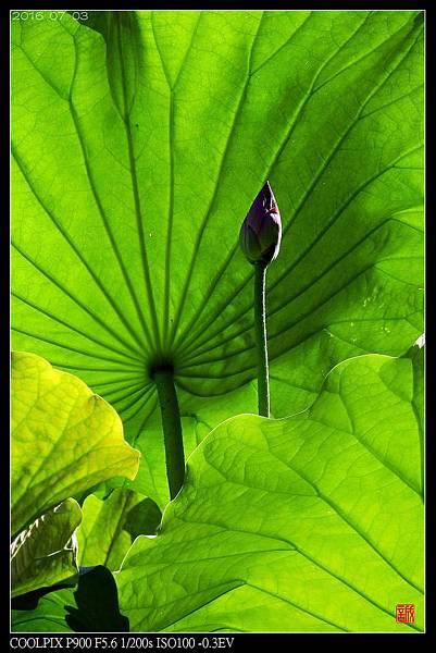 nEO_IMG_160703--Botanical Garden 029-1000.jpg