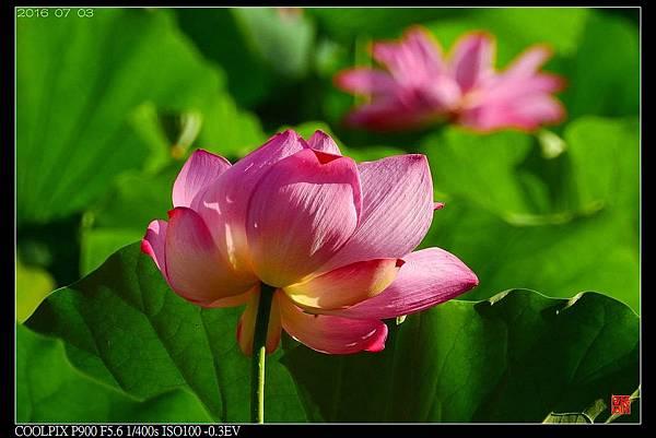 nEO_IMG_160703--Botanical Garden 032-1000.jpg