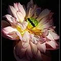 nEO_IMG_160703--Botanical Garden 041-1000.jpg