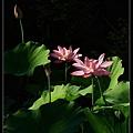 nEO_IMG_160703--Botanical Garden 048-1000.jpg