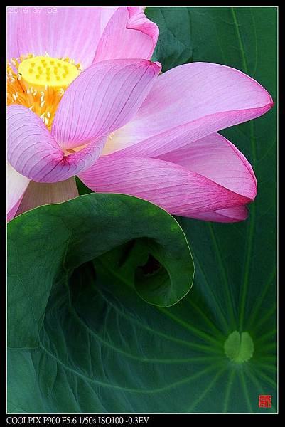 nEO_IMG_160703--Botanical Garden 052-1000.jpg