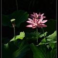 nEO_IMG_160703--Botanical Garden 043-1000.jpg