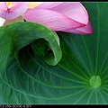 nEO_IMG_160703--Botanical Garden 065-1000.jpg