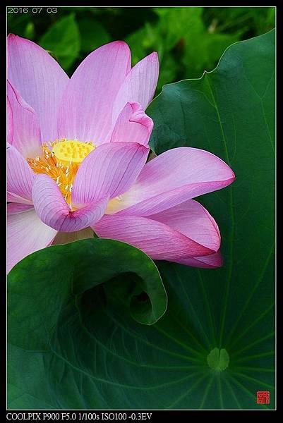 nEO_IMG_160703--Botanical Garden 061-1000.jpg