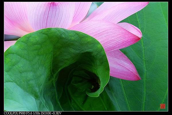 nEO_IMG_160703--Botanical Garden 054-1000.jpg