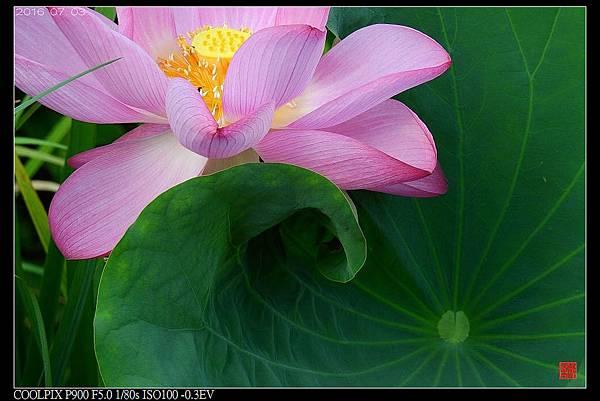 nEO_IMG_160703--Botanical Garden 067-1000.jpg