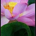 nEO_IMG_160703--Botanical Garden 062-1000.jpg