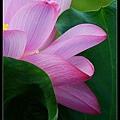 nEO_IMG_160703--Botanical Garden 070-1000.jpg