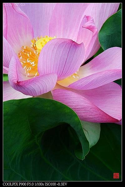 nEO_IMG_160703--Botanical Garden 080-1000.jpg