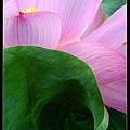 nEO_IMG_160703--Botanical Garden 076-1000.jpg