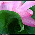 nEO_IMG_160703--Botanical Garden 074-1000.jpg
