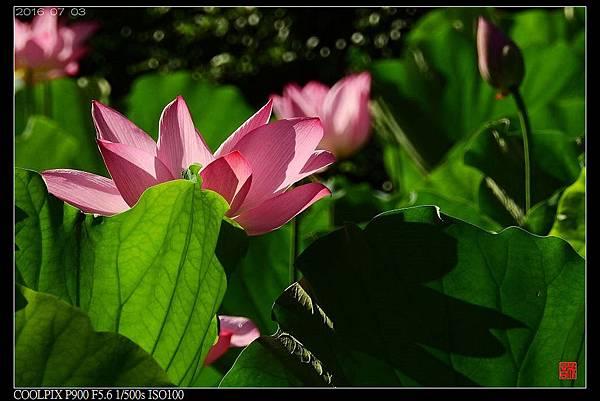 nEO_IMG_160703--Botanical Garden 087-1000.jpg