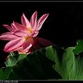 nEO_IMG_160703--Botanical Garden 086-1000.jpg