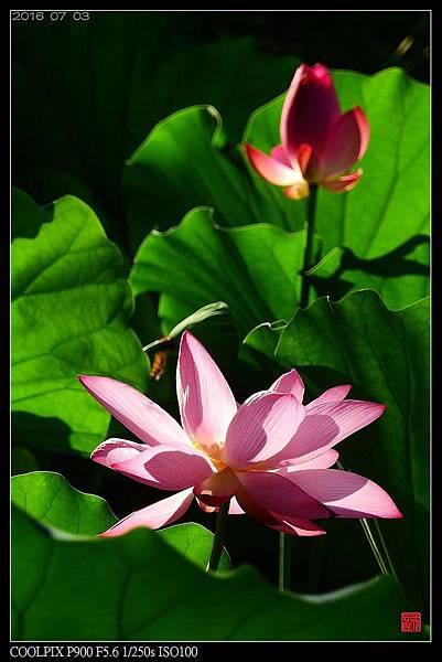 nEO_IMG_160703--Botanical Garden 096-1000.jpg