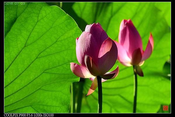 nEO_IMG_160703--Botanical Garden 090-1000.jpg