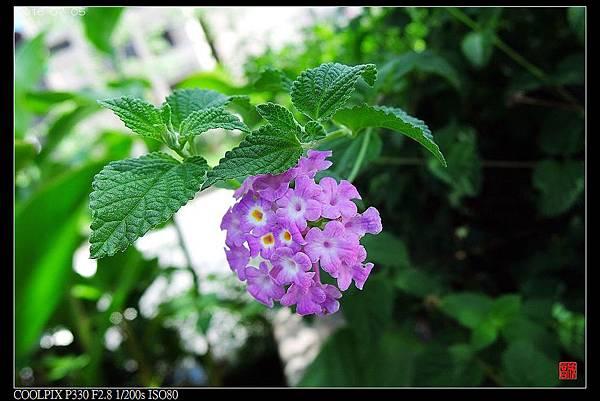 nEO_IMG_160705--City Snapshots P330 025-1000.jpg