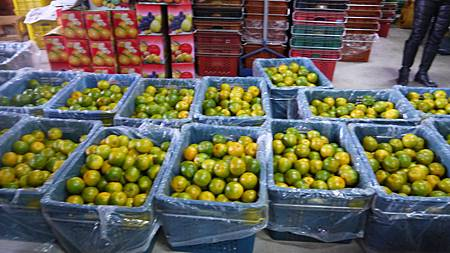分裝成籃的柑橘.JPG