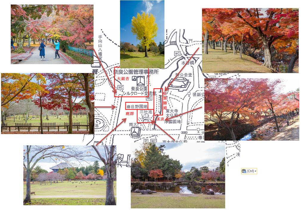 賞楓地圖3.png
