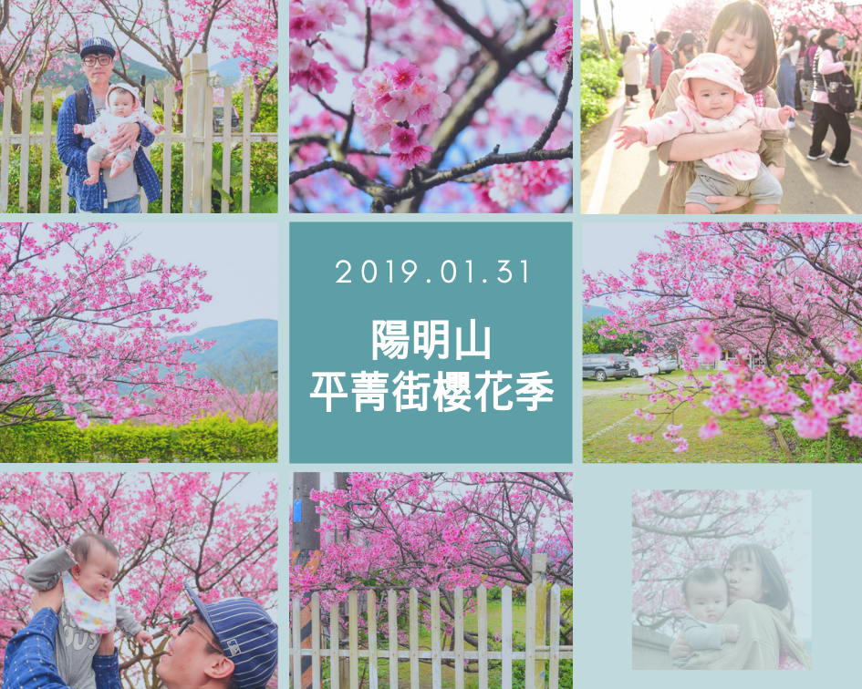 陽明山 平菁街櫻花季.png