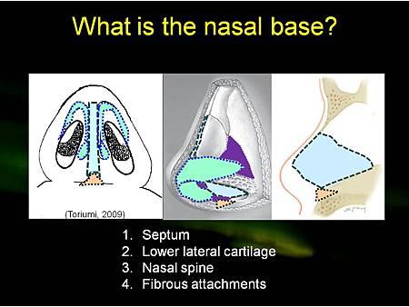 nasal base