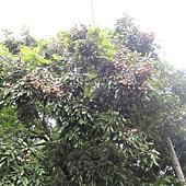 DSCN2330.JPG