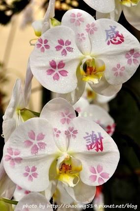 2013花卉設計(爭豔館)-1