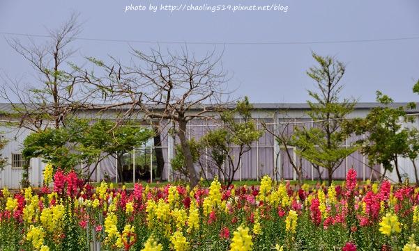 向陽農場-6