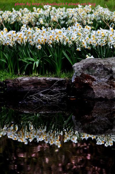 陽明山水仙花園-1.JPG