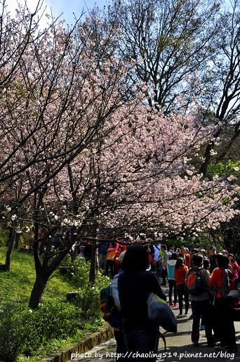2015陽明山花季-1.JPG