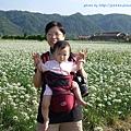 大溪韭菜花田-7.jpg