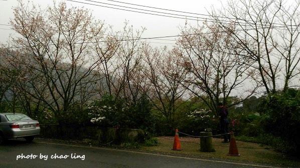 三芝追櫻-1.jpg