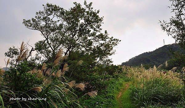 鶯歌幸福步道-26.JPG