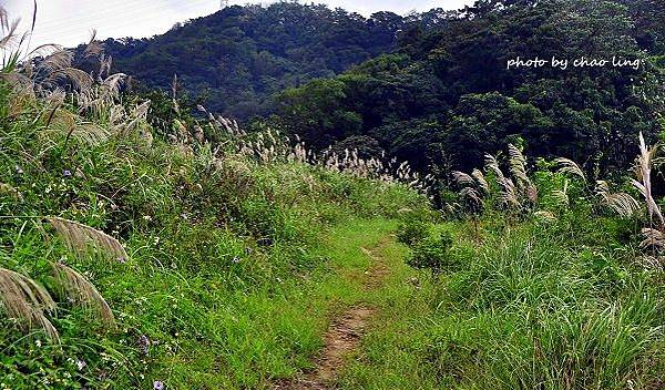 鶯歌幸福步道-29.JPG