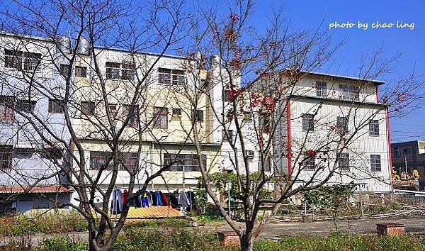 橫山冬景-4.JPG
