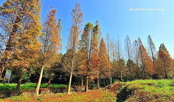 橫山冬景-18.JPG