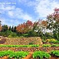 新埔花園-9.JPG