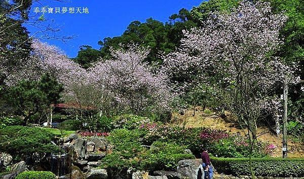 三板橋民宅櫻花園-1.JPG