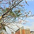 北大風鈴木-19.JPG