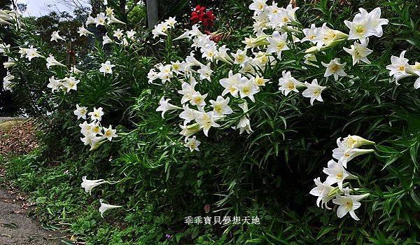鶯歌阿四巷-34.JPG