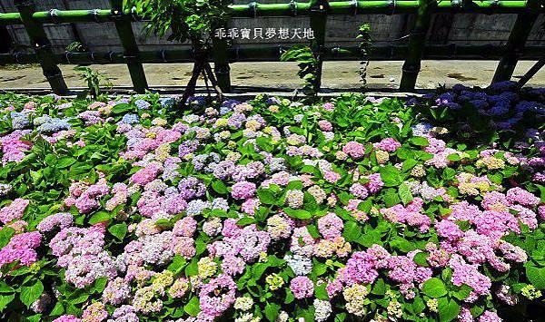 黎明步道花園-21.JPG