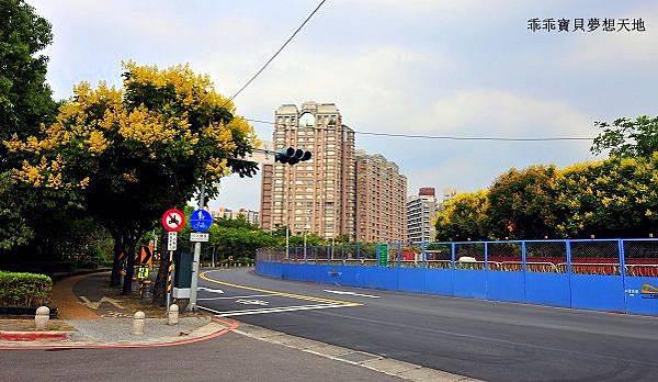 台北大學欒樹-5.JPG