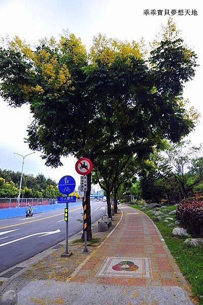 台北大學欒樹-7.JPG