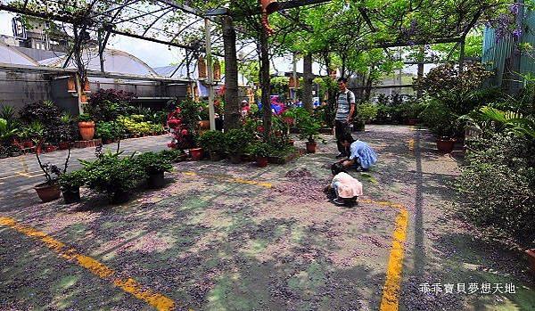 台北花卉村-2.JPG
