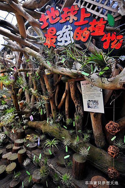 台北花卉村-17.JPG