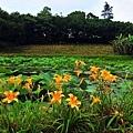 牧蜂農場-12.JPG