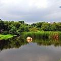 鹿角溪濕地-23.JPG