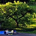 八里文化公園-12.JPG