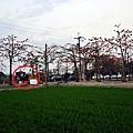 林初埤-3.JPG