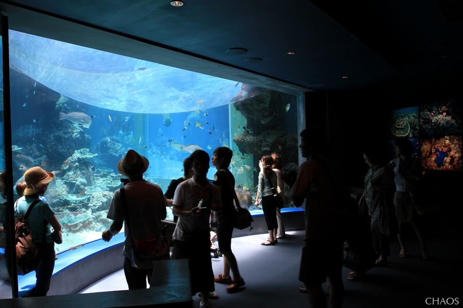 麗星郵輪-沖繩(海洋博公園) (12).jpg